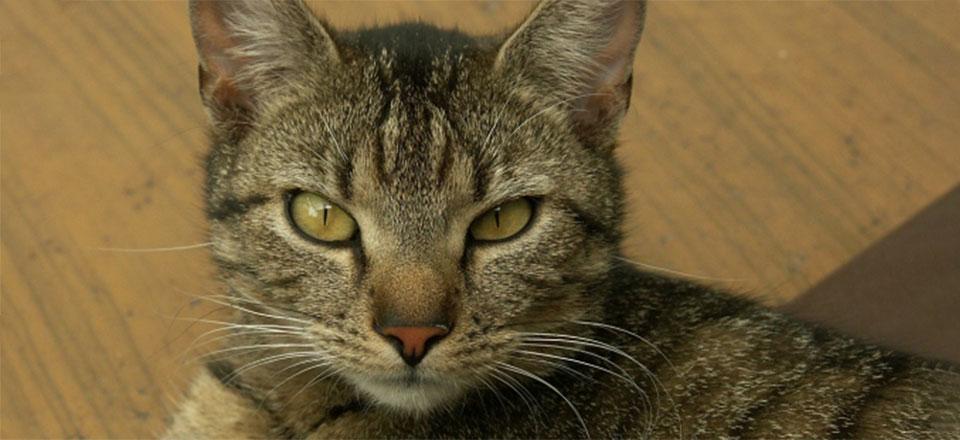 Moderní ochrana koček proti klíšťatům a blechám