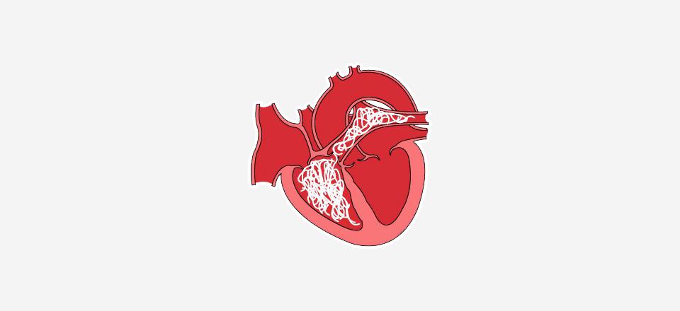 Srdeční červi, reálná hrozba