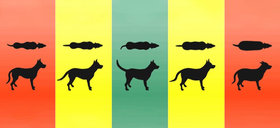 Jak vypadá pes s ideální hmotností a co se děje v psovi s nadváhou