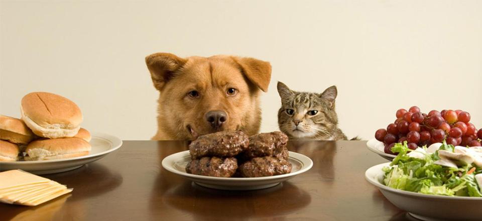 Jak překrmujeme svou kočku a jak překrmujeme svého psa