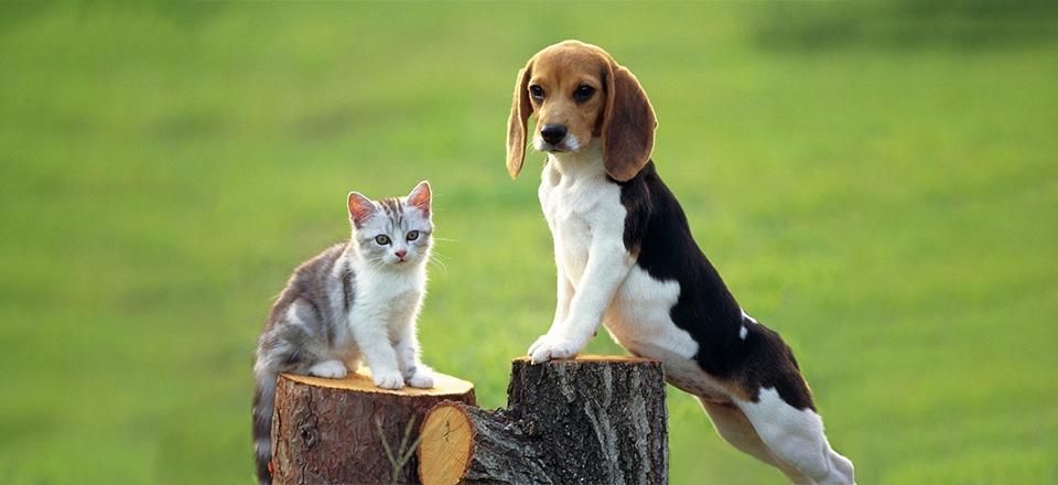 V jaké kondici je Váš pes a Vaše kočka