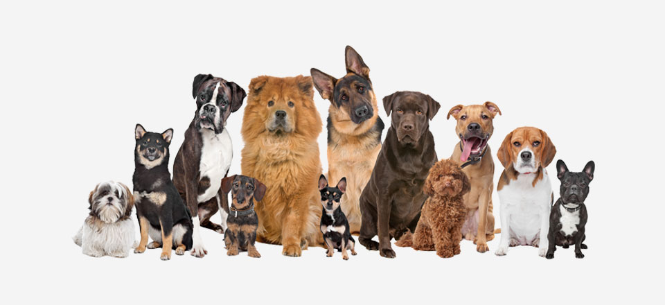 Hmotnosti vybraných plemen psů a koček v ideální tělesné kondici