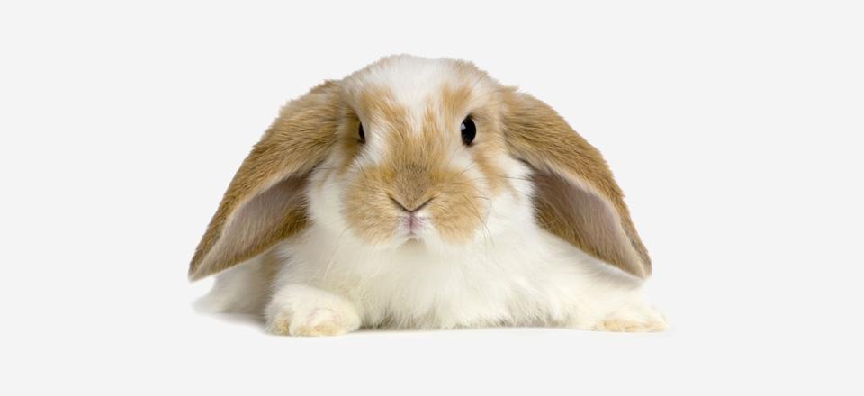 Spokojený králíček