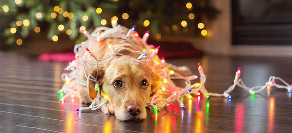 Vánoce – svátky chaosu: Ochraňte mazlíčky před nebezpečím!