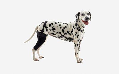 Poranění a ruptura zkříženého vazu v koleni