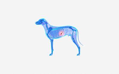 Onemocnění žlučníku u psa