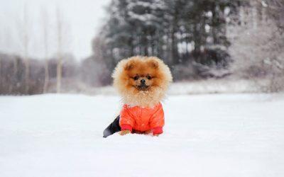 Zvířata a zimní počasí