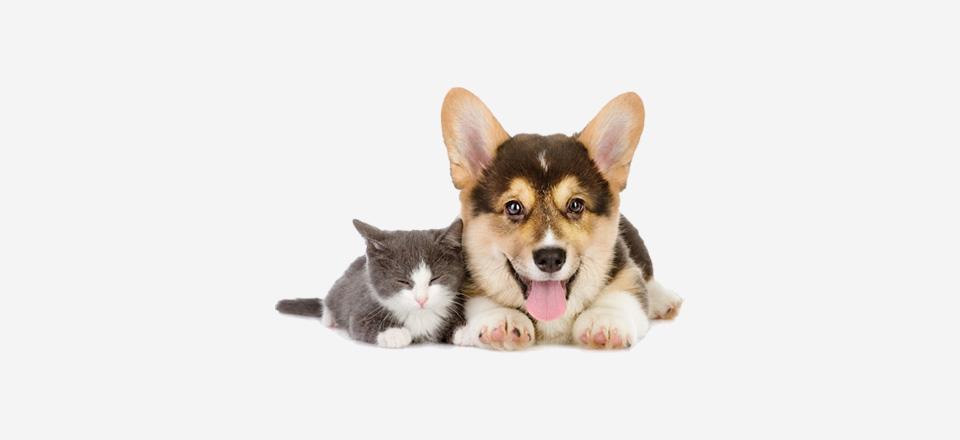 Reprodukce psů a koček